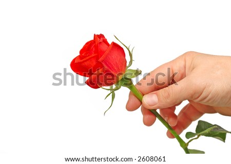hand holding a red rose on white background