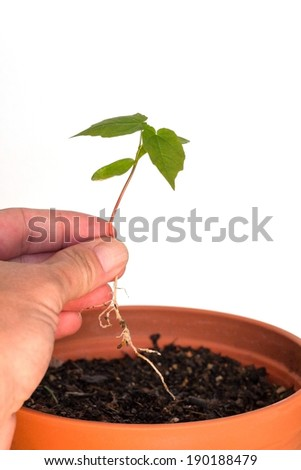 Hand holding a seedling and flower pot with soil - isolated on white background