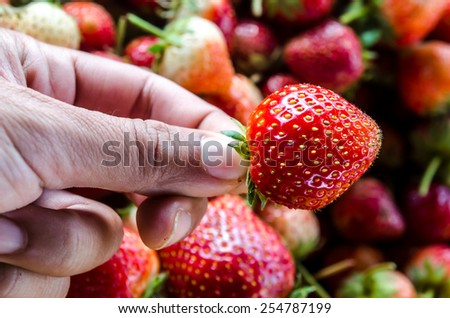 Hand holding a strawberry with strawberries background. - stock photo