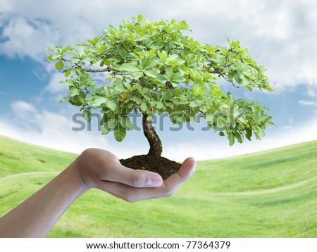 Hand holding a tree - stock photo