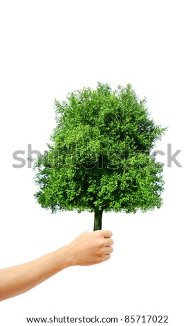 hand holding a tree - stock photo