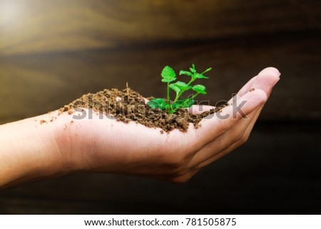 Hand holding a young tree sapling,caring for plants""