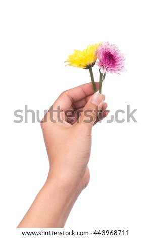 hand holding bouquet of yellow and purple chrysanthemum flowers  isolated on white background. - stock photo
