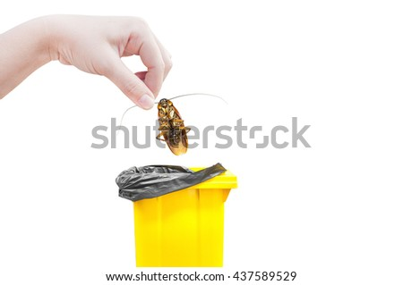 Hand holding brown cockroach and bin yellow Isolated on a white background,Cockroaches as carriers of disease - stock photo