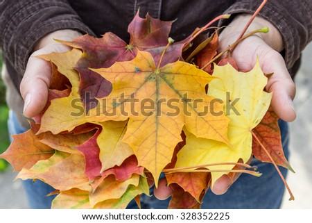 Hand holding colorful autumn leaves / autumn leaves / Maple leaves