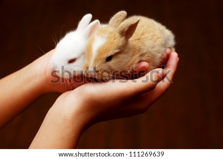 Hand holding cute brown and white baby rabbit - stock photo