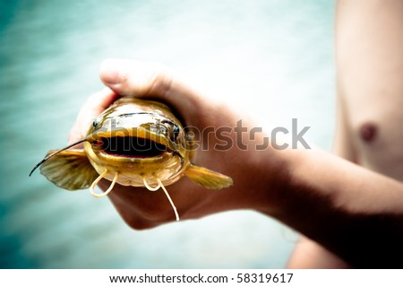 hand holding freshly caught cat fish - stock photo