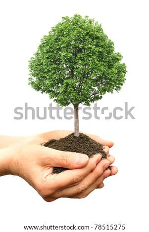 Hand holding green tree - stock photo