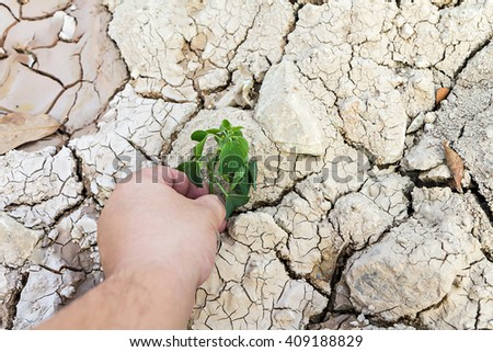 Hand holding green tree sprout on cracked ground