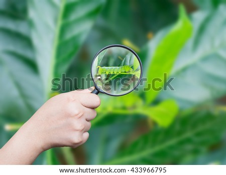 hand holding magnifying find caterpillar green eating on green nature background,