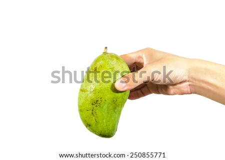 Hand holding mango on white background - stock photo