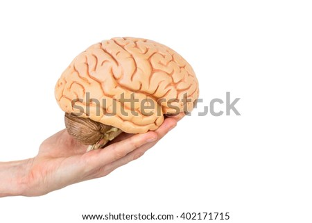 Hand holding model human brains isolated on white background - stock photo