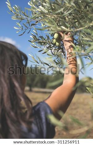 Hand holding olive tree branch. Sun light - stock photo