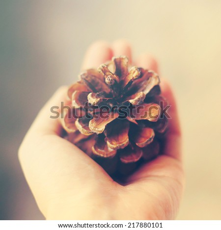 Hand holding pine cone with retro instagram filter effect - stock photo