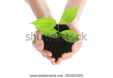 Hand holding plant isolated - stock photo