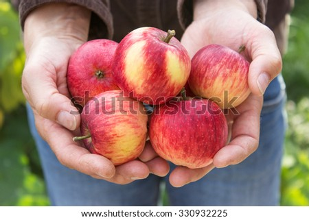 Hand holding red apples / red apples / ripe apples