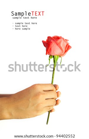 Hand holding rose flower, isolate on white background