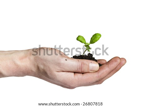 hand holding small sprout in soil
