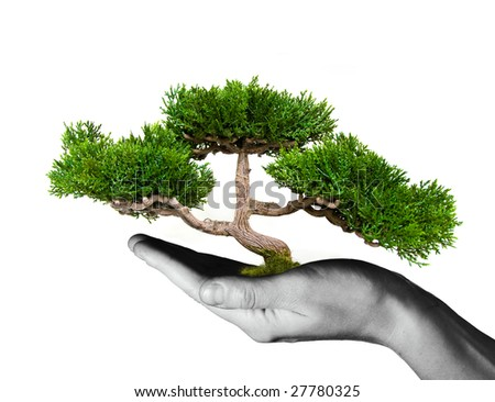 Hand holding tree - stock photo