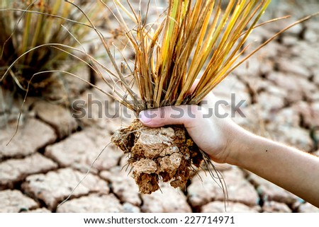 hand holding tree dry on  arid land - stock photo