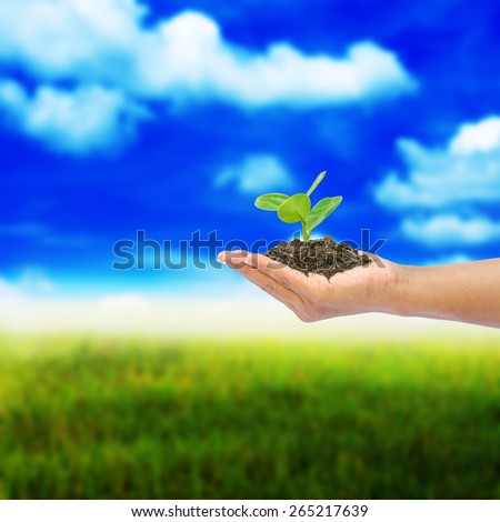 hand holding tree  on abstract nature background