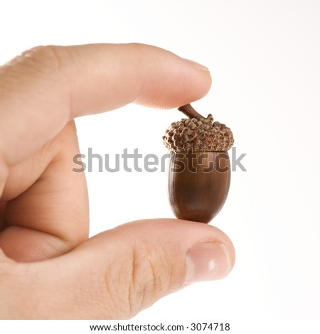 Hand holding up single acorn between two fingers. - stock photo