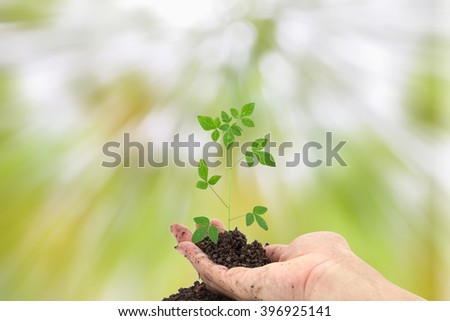 Hand holding Young green plant on  the soil ,on nature green background.  - stock photo