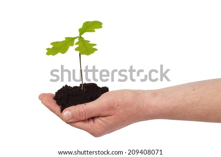 Hand holding young oak tree - stock photo