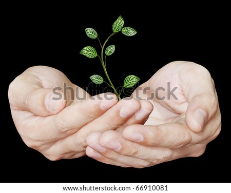 Hand holding young plant - stock photo