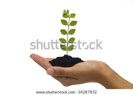 Hand holding young plant against white background