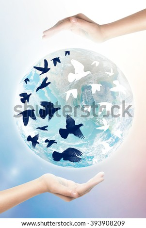 hand hope a birds flying yin yang shape at Earth , white and black, Balance concept, save earth concept. - stock photo