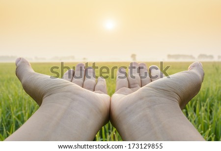 Hand in a green fields among sunrise - stock photo