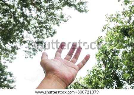 hand in the garden - stock photo