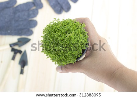 Hand is holding plant in pot. Gardening tools are blur background. Selective focus to hand holding is plant.