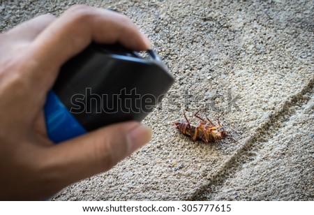 Hand kill a cockroach - cockroach focus  - stock photo