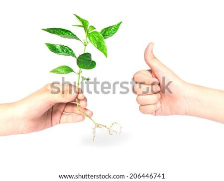 hand like giving a tree  - stock photo