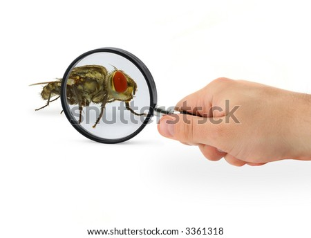 hand magnifying home fly isolated on white background - stock photo