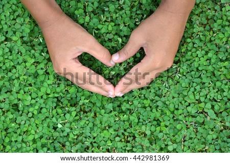 Hand make a heart shape on fresh grass. Hand make a heart shape on the grass green. - stock photo