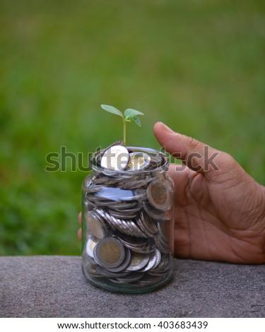Hand man show seedling growing in money - stock photo