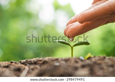 hand nurturing and watering a young plant / Love and protect nature concept / nurturing baby plant - stock photo
