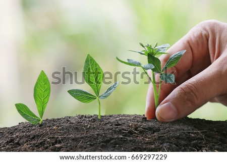 Hand nurturing baby plants growing in germination sequence on fertile soil with natural green background