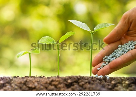 hand of a farmer giving fertilizer to young green plants growing in germination sequence / nurturing baby plant with chemical fertilizer - stock photo