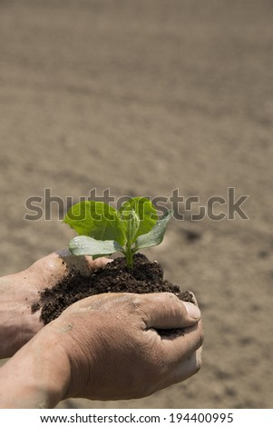 Hand of farmer with vegetable seedlings in the field