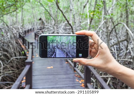 Hand of girl taking pictures on a mobile phone in wooden bridge the forest mangrove at Petchaburi, Thailand - stock photo