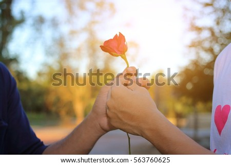 Hand of man is giving a red rose to woman on nature blurred background with sunshine effect. Romantic lovers dating. Valentine's day concept.