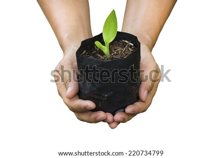 Hand of people to plant seedlings  - stock photo