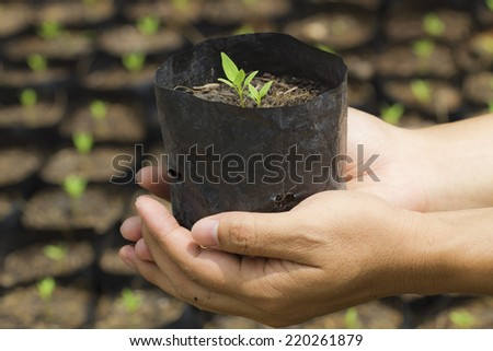 Hand of people to plant vegetable seedlings - stock photo