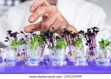Hand of senior male tech selects a batch of cress-salat for quality control. Shallow DOF, focus on the second row of the plants. - stock photo