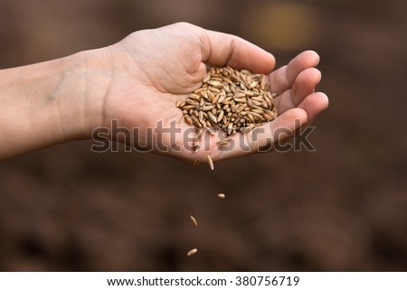 hand of woman pouring rye grain