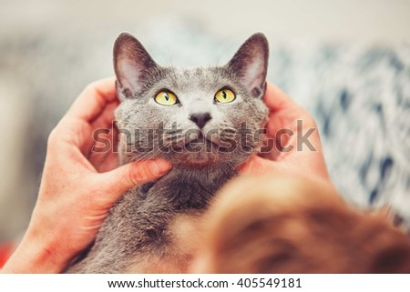 Hand of young man with his russian blue cat. - stock photo